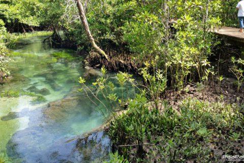 เที่ยวป่าพรุ ท่าปอมคลองสองน้ำ