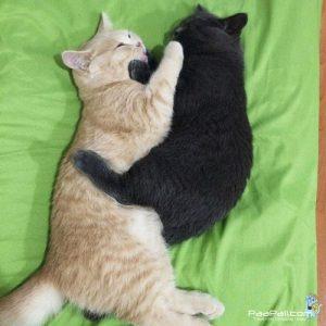 เปิดตัว 2 พี่น้อง เจคอป-เบลล่า ลูกเหมี้ยวตัวน้อยที่ใครๆ ก็ต้องหลงรัก