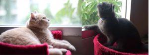5 วิธีการง่ายๆ เมื่อต้องเตรียมตัวเลี้ยงน้องแมวในคอนโด