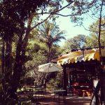 หลงป่า (Lhong-Pa) (13)
