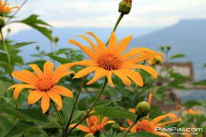 ภูป่าเปาะ  ฟูจิเมืองไทย อ.หนองหิน เมืองเลย (12)