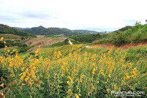 ภูป่าเปาะ  ฟูจิเมืองไทย อ.หนองหิน เมืองเลย (16)