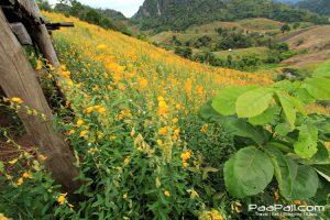 ภูป่าเปาะ  ฟูจิเมืองไทย อ.หนองหิน เมืองเลย (18)
