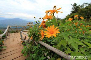 ภูป่าเปาะ  ฟูจิเมืองไทย อ.หนองหิน เมืองเลย (8)