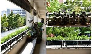 main_garden