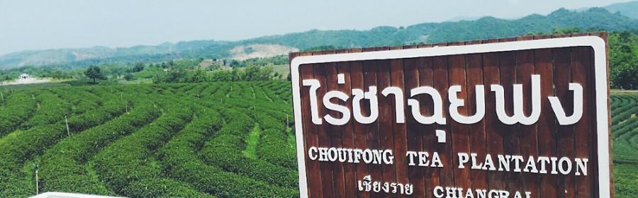 Choui-Fong-Tea-19