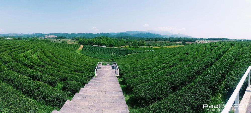 Choui Fong Tea (22)