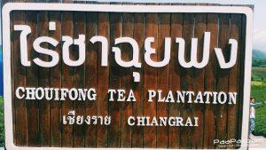 Choui Fong Tea (23)