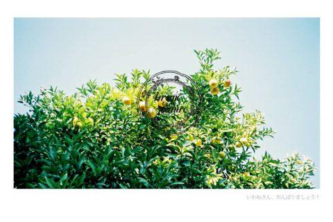 """ชวนนั่งชิลล์ด้วยกันที่ """"Iwane goes Nature"""" คาเฟ่แนวญี่ปุ่น"""