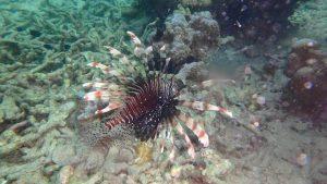 ปะการังที่เกาะค็อกคอม