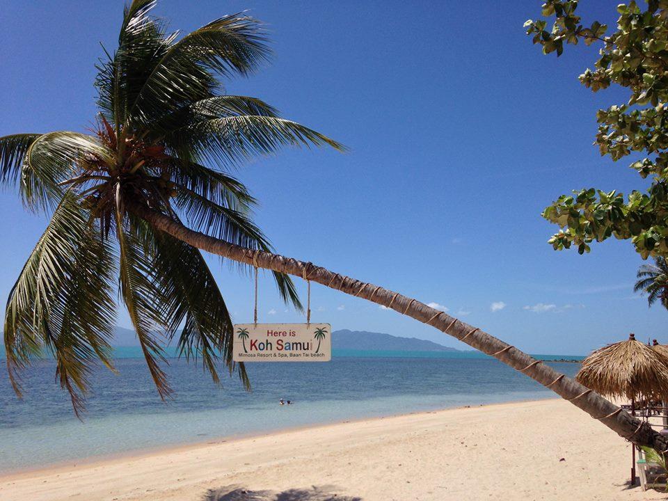 Mimosa Resort  (9)