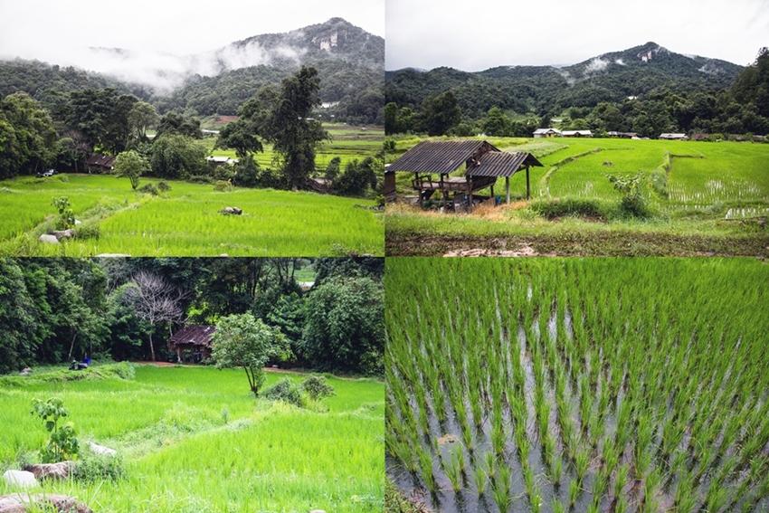 Chiang Mai  (15)