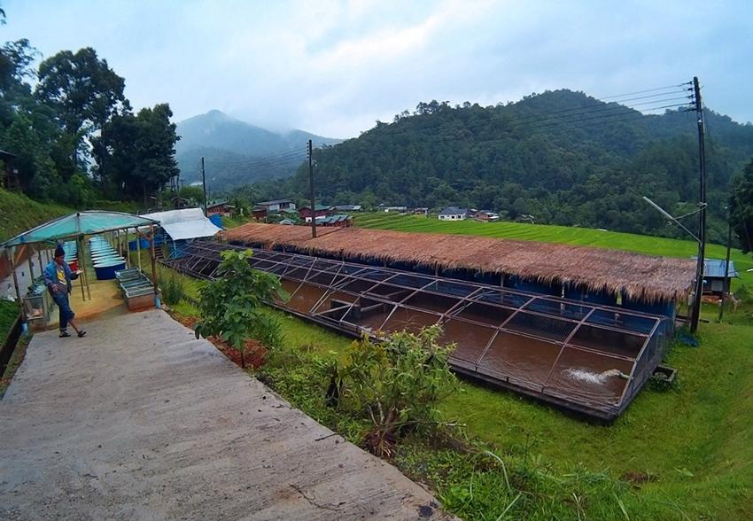 Chiang Mai  (17)