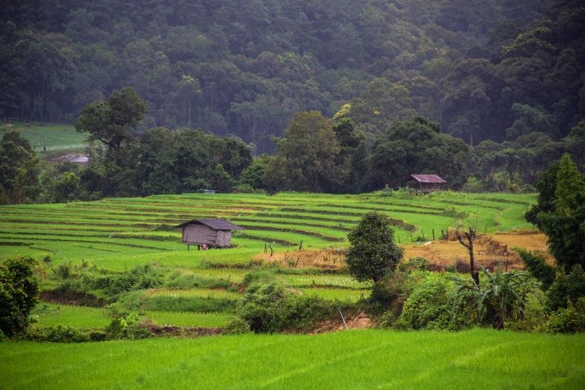 Chiang Mai  (19)