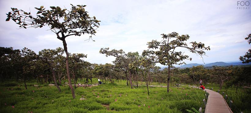 ป่าหินงาม........วันไม่มีหมอก ภาพวาดจากธรรมชาติ