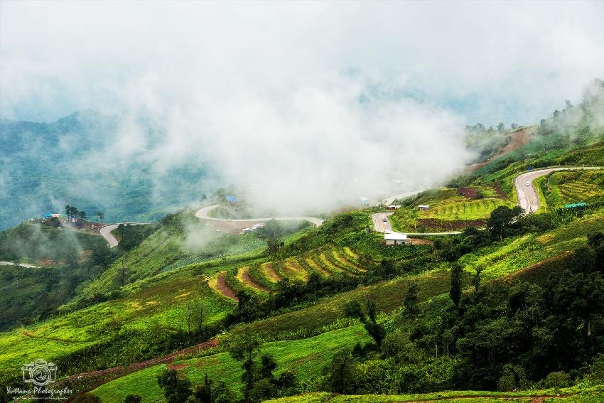 damp fog of forest in phuthapboek thailand