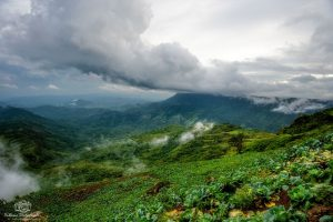 damp fog of forest in phuthapboek thailand