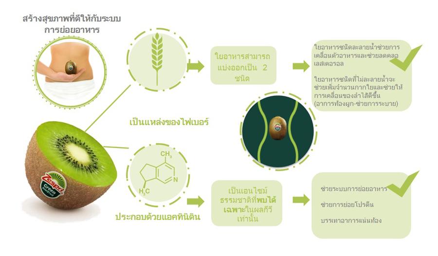 Zespri-green---Digestive-health_TH