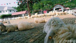 Swiss Sheep Farm (10)