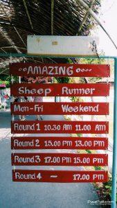 Swiss Sheep Farm (13)