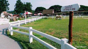 Swiss Sheep Farm (22)
