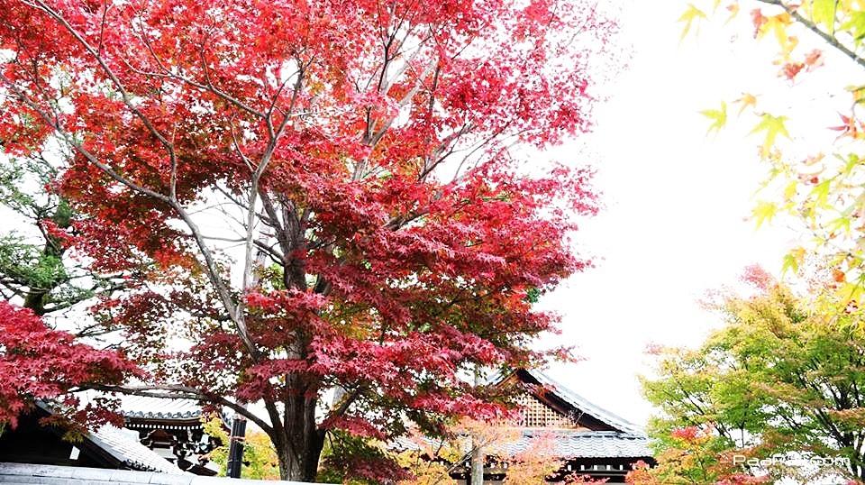 japanfinal_3823