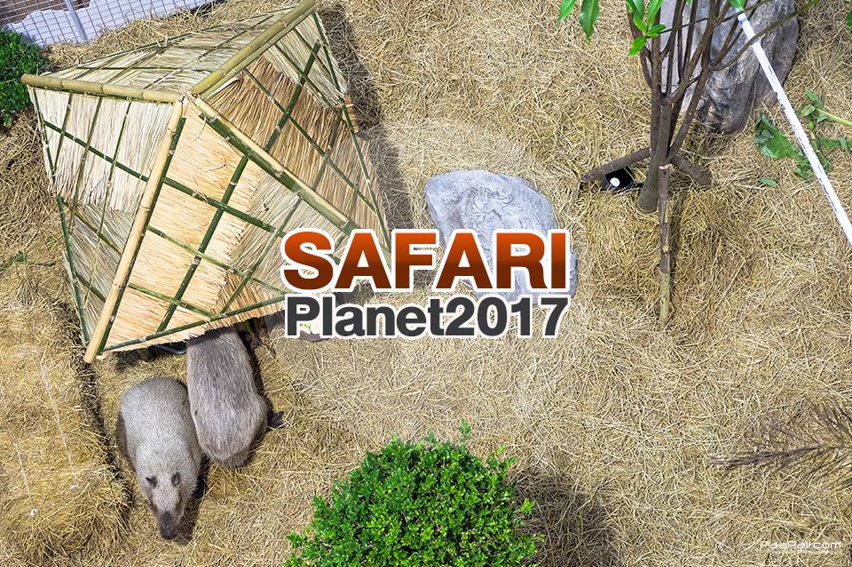 """""""เซ็นทรัล"""" จัดให้ยกซาฟารี มาไว้กลางห้าง ในงาน Safari Planet 2017 สัตว์หายากเพียบ!!"""