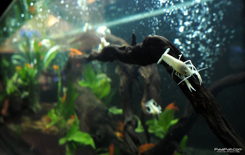 The Art of Aqua Life (11)