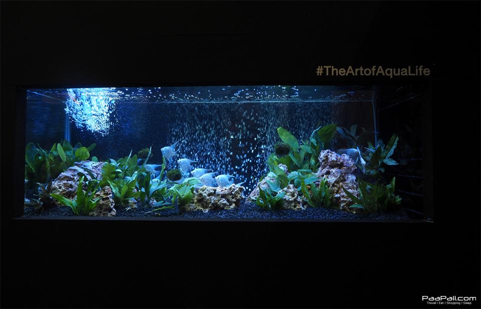 The Art of Aqua Life (17)