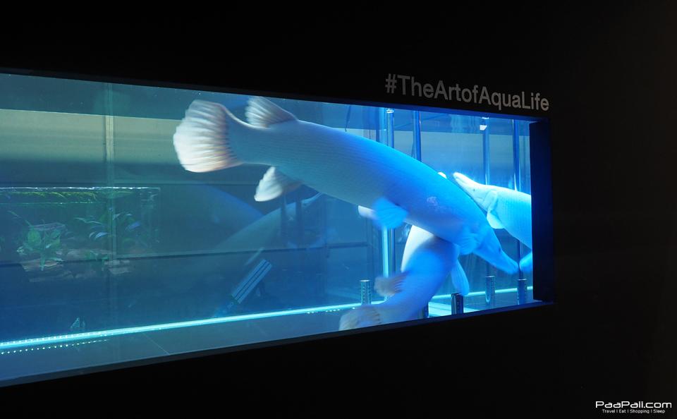The Art of Aqua Life (21)