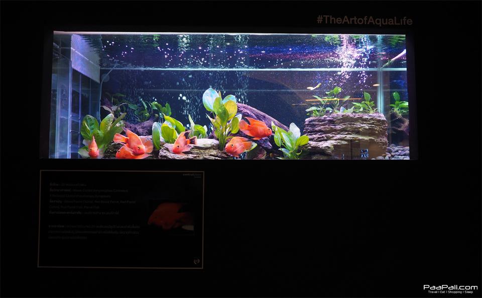The Art of Aqua Life (22)