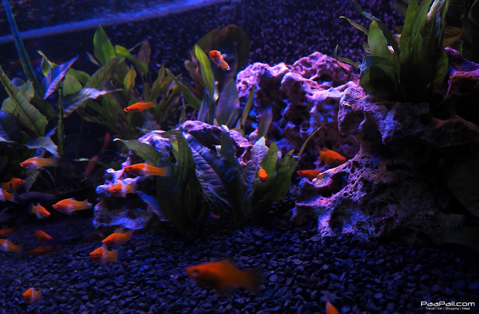 The Art of Aqua Life (26)