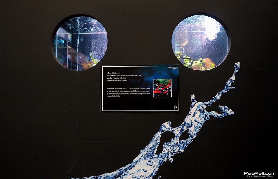 The Art of Aqua Life (55)