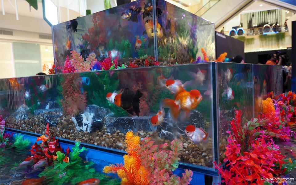 The Art of Aqua Life (56)