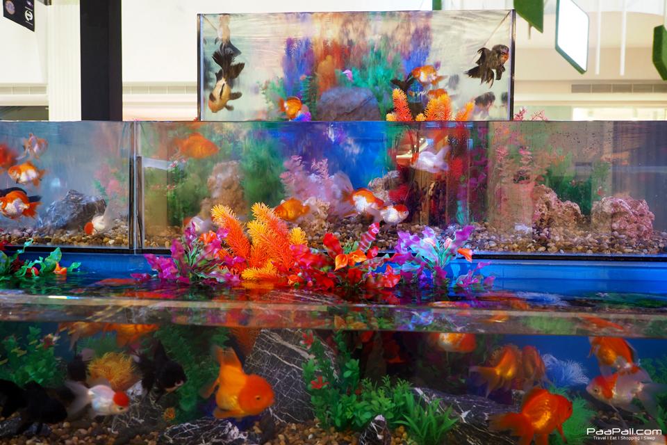 The Art of Aqua Life (6)
