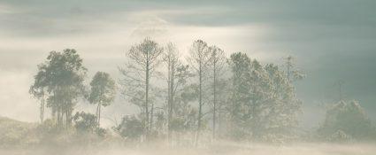 Fog in the rain (2)