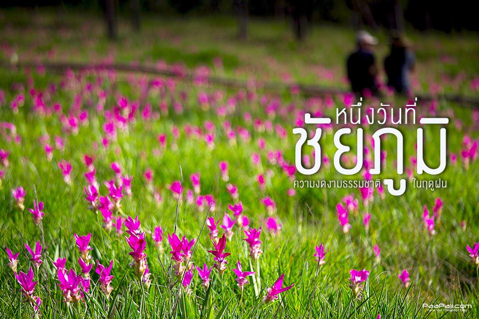 chaiyaphum (12)