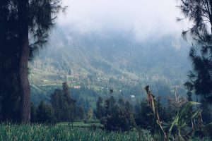 Mount Bromo (43)