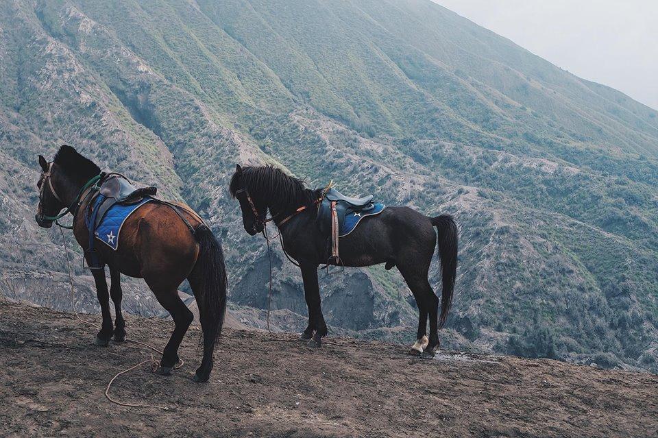 Mount Bromo (66)
