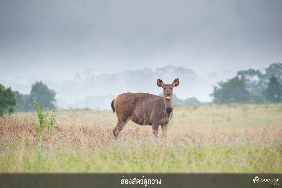 Khao Yai National Park (13)