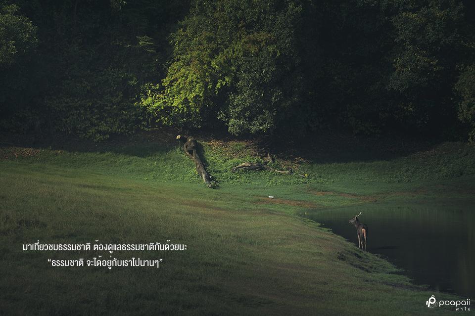 Khao Yai National Park (17)