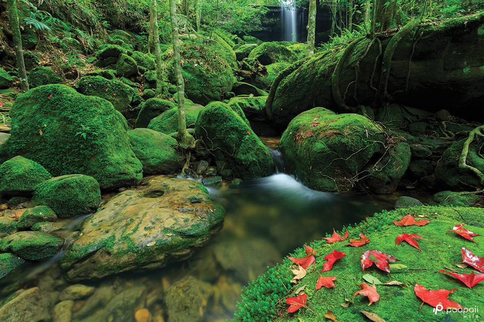 ธรรมชาติสีเขียว