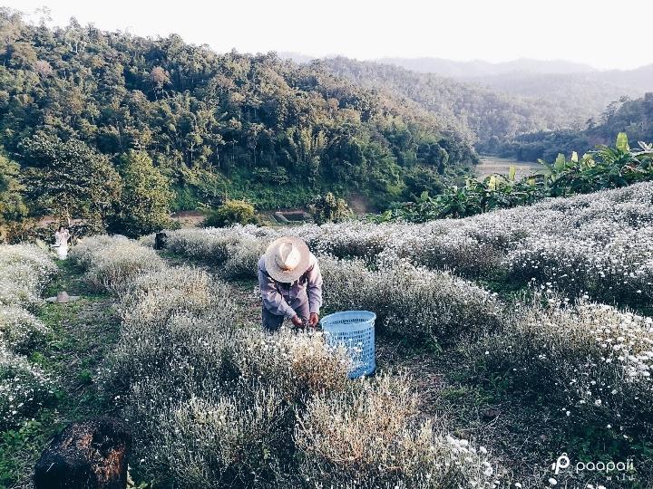 samoeng (11)