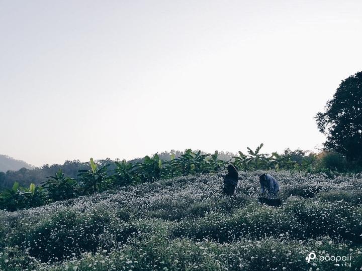 samoeng (13)