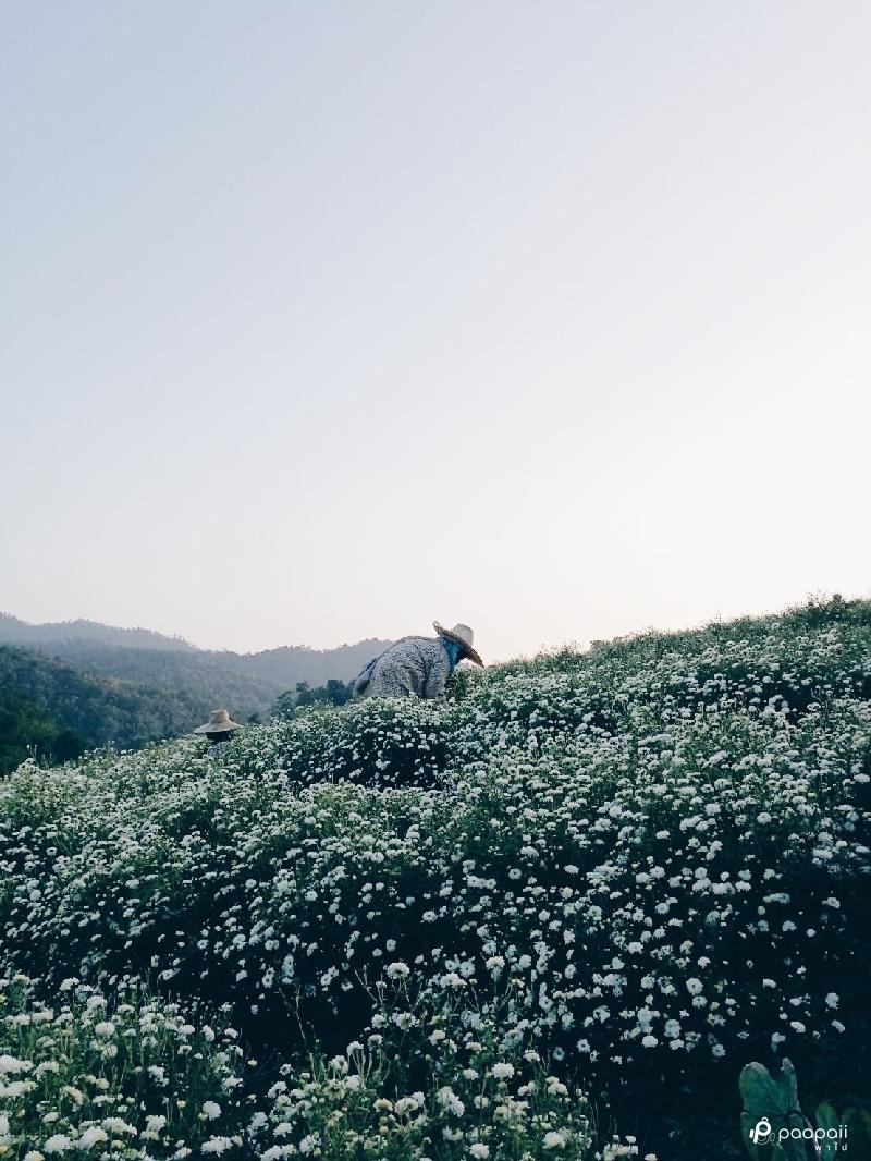 samoeng (20)