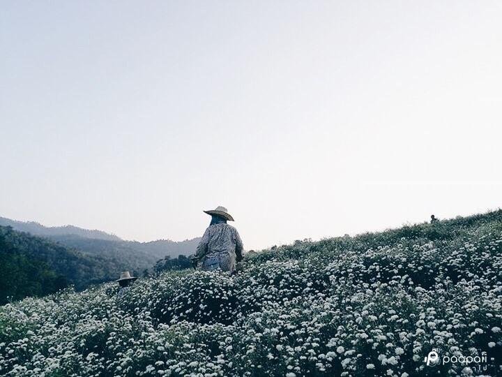 samoeng (3)