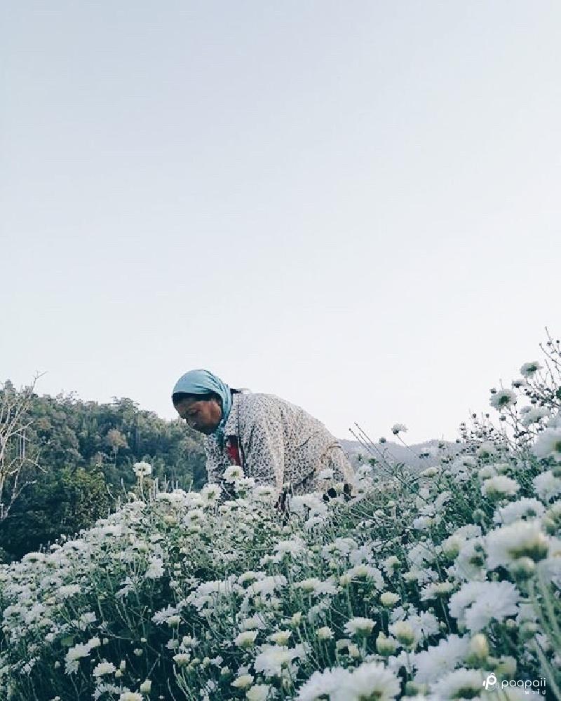 samoeng (4)
