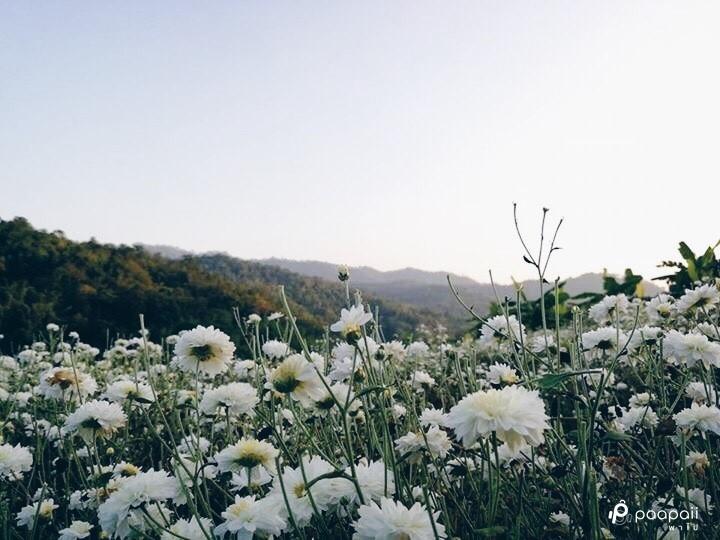 samoeng (6)