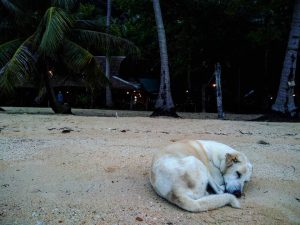 Koh Waii Paradise (24)