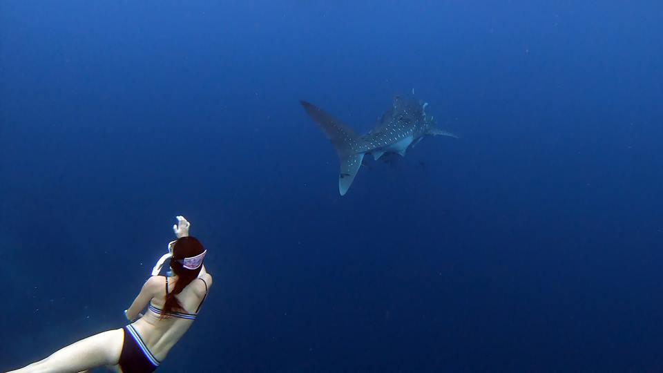"""รีวิว """"เกาะร้านเป็ด เกาะร้านไก่ จ.ชุมพร"""" ชมฉลามวาฬพระเอกของที่น้อยคนที่จะได้ไปสัมผัส"""